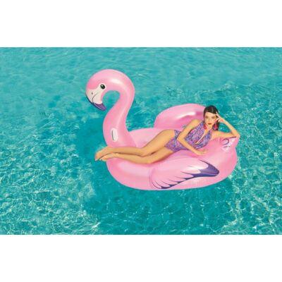 flamingo_felnott